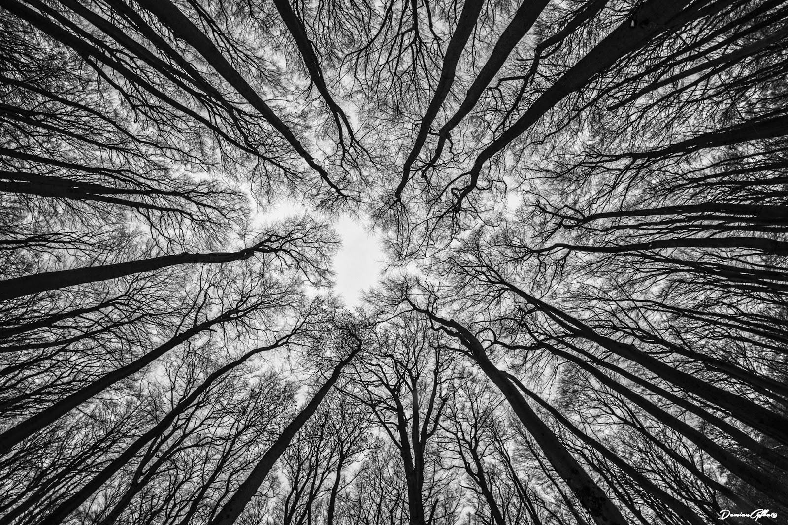 500px forest nature trees rain overlapping 4d fisheye visit wonders natural iso sham named standing taken another perfect photograph